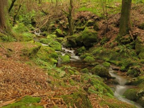 De Serra da Cabreira is een middelgebergte van graniet