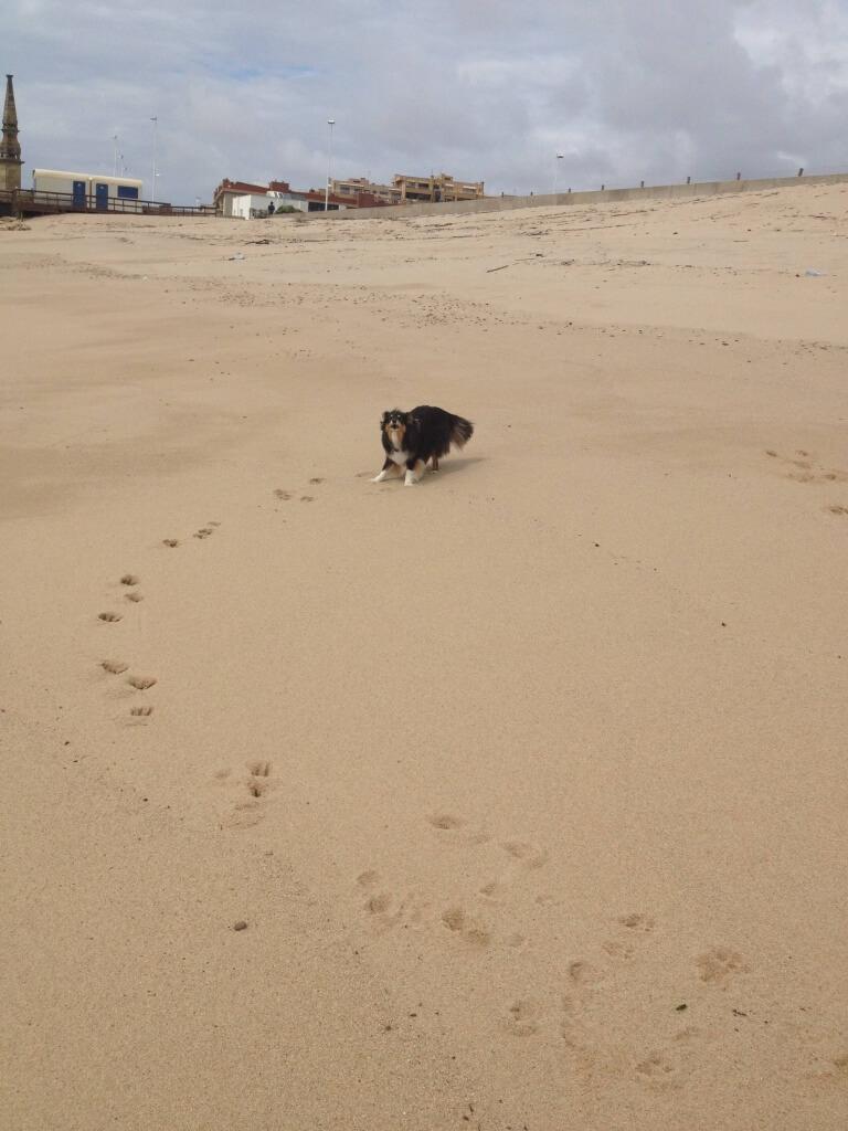Vila de Conde strand - Dit strandje is perfect voor een wandeling met de hond